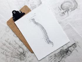 脊髄デッサン